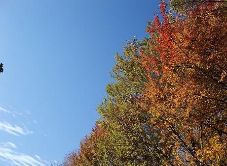 2012-11-16-10-54-14(1)_aa.jpg