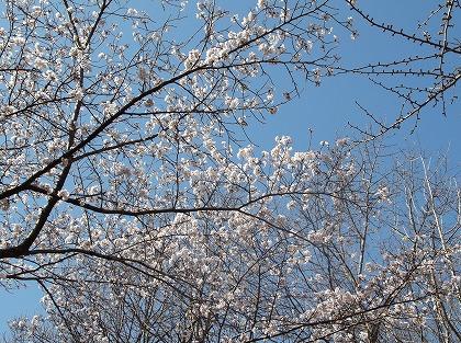 2013-03-21-21-58-10_aa.jpg