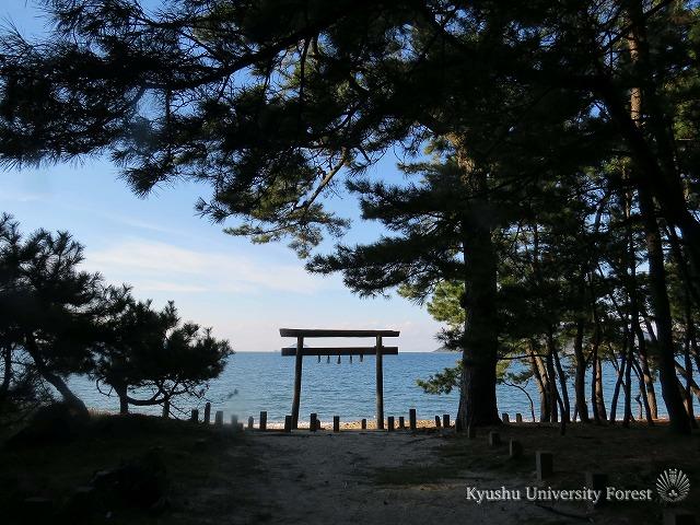 r松と鳥居と海と私と.jpg